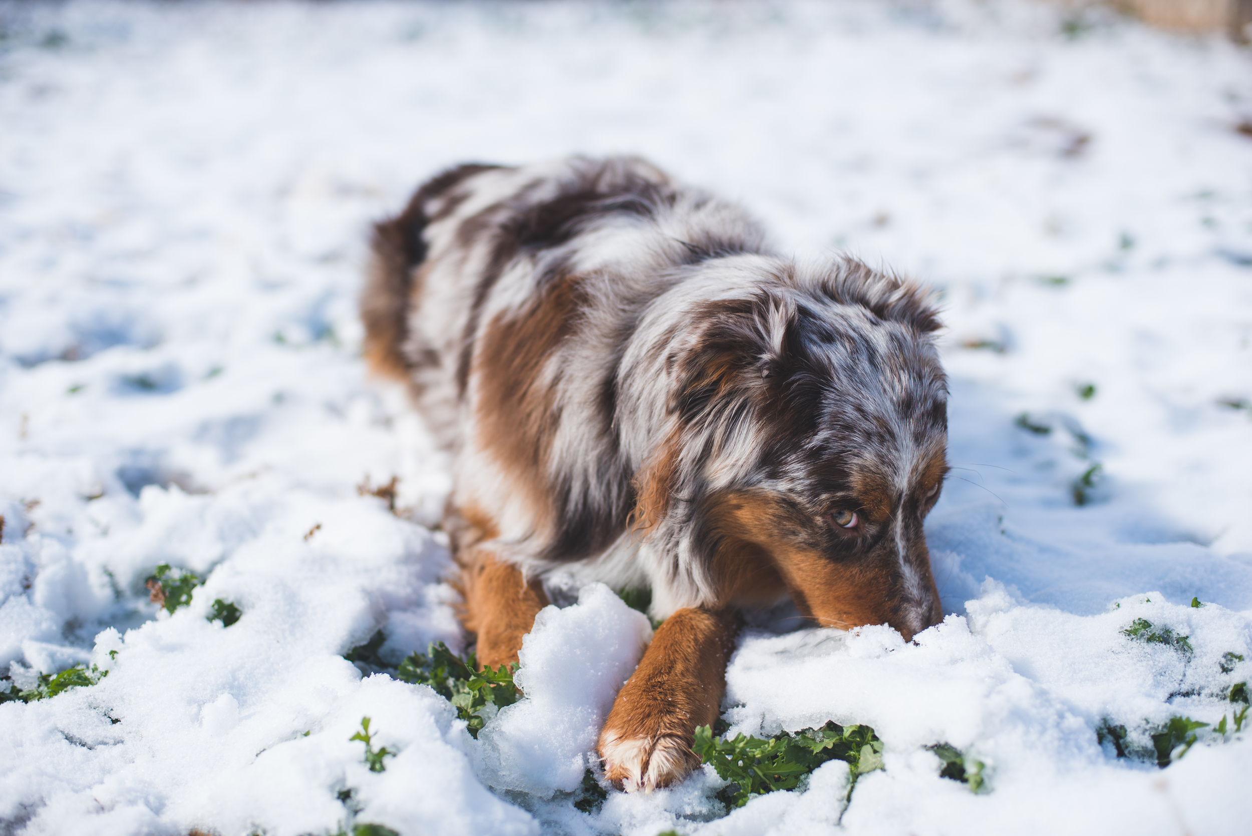 Snow is this little one's absolute favorite. She couldn't be bothered as she tried to eat all of it!