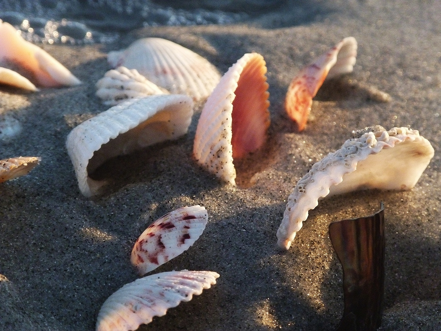 Shells supported in the sand