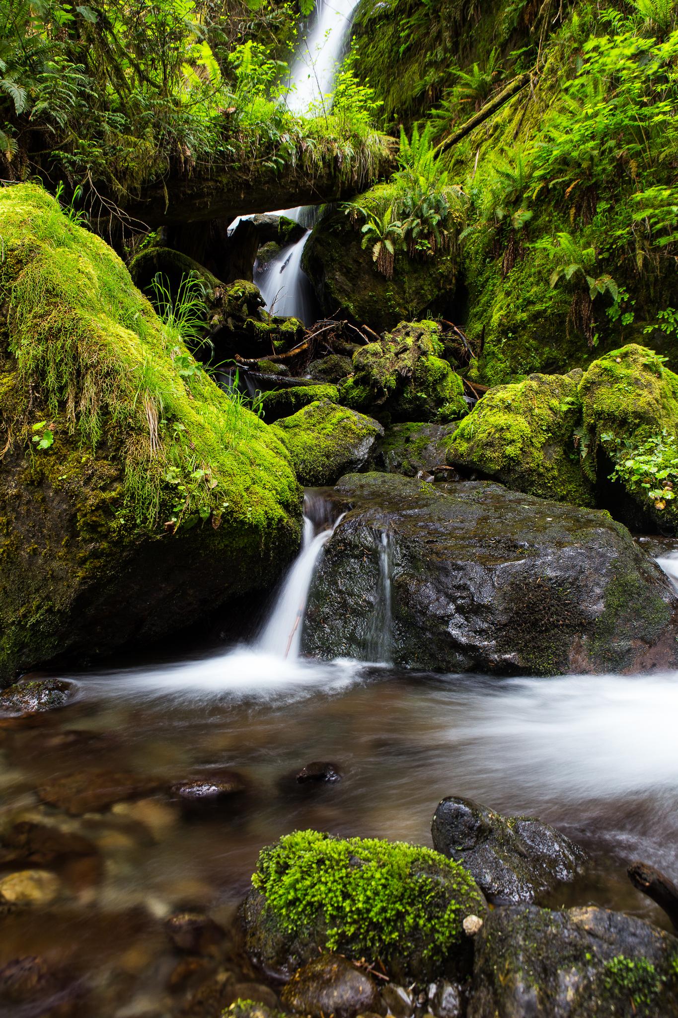 Merriman Falls, Olympic National Park