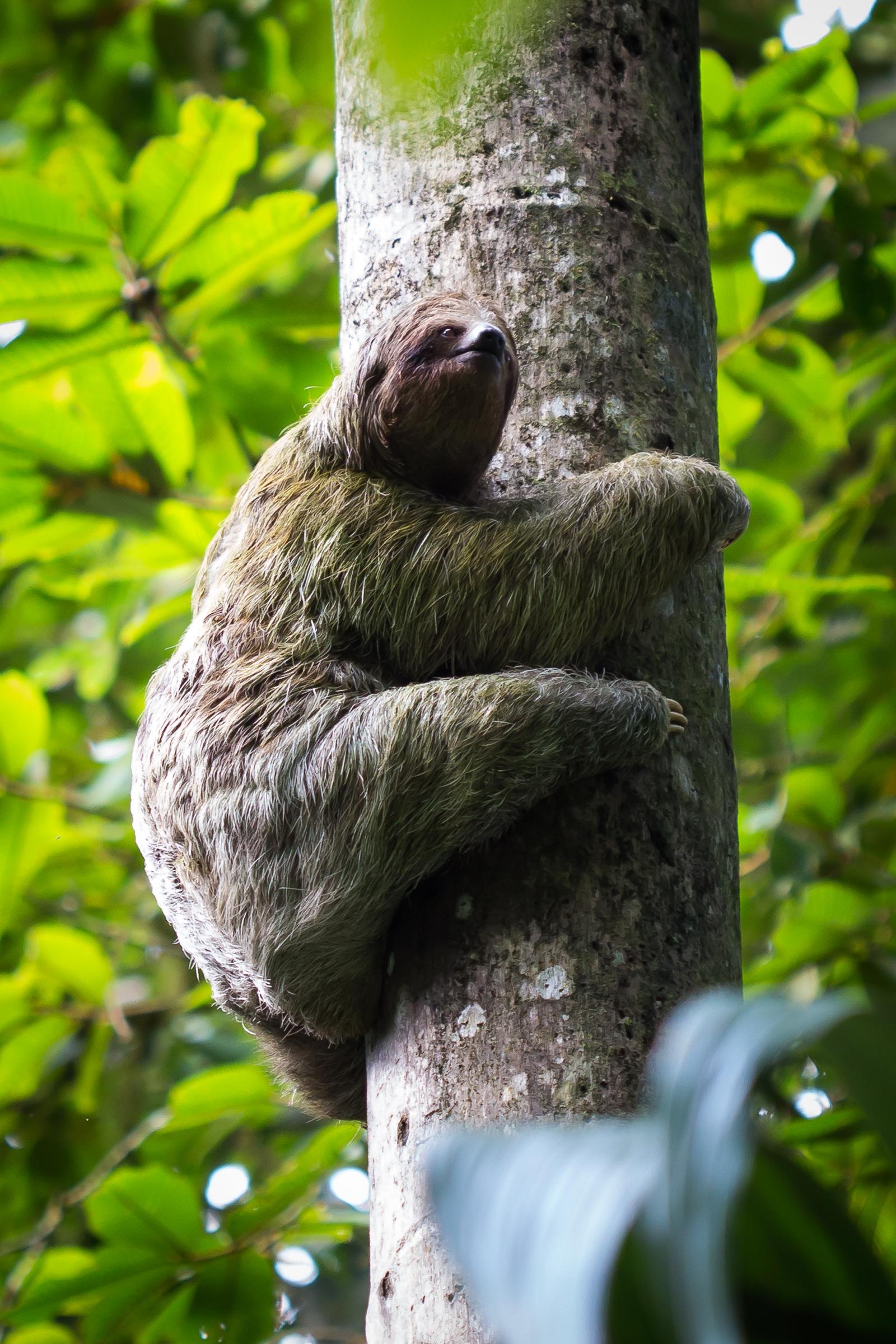 The original tree-hugger!
