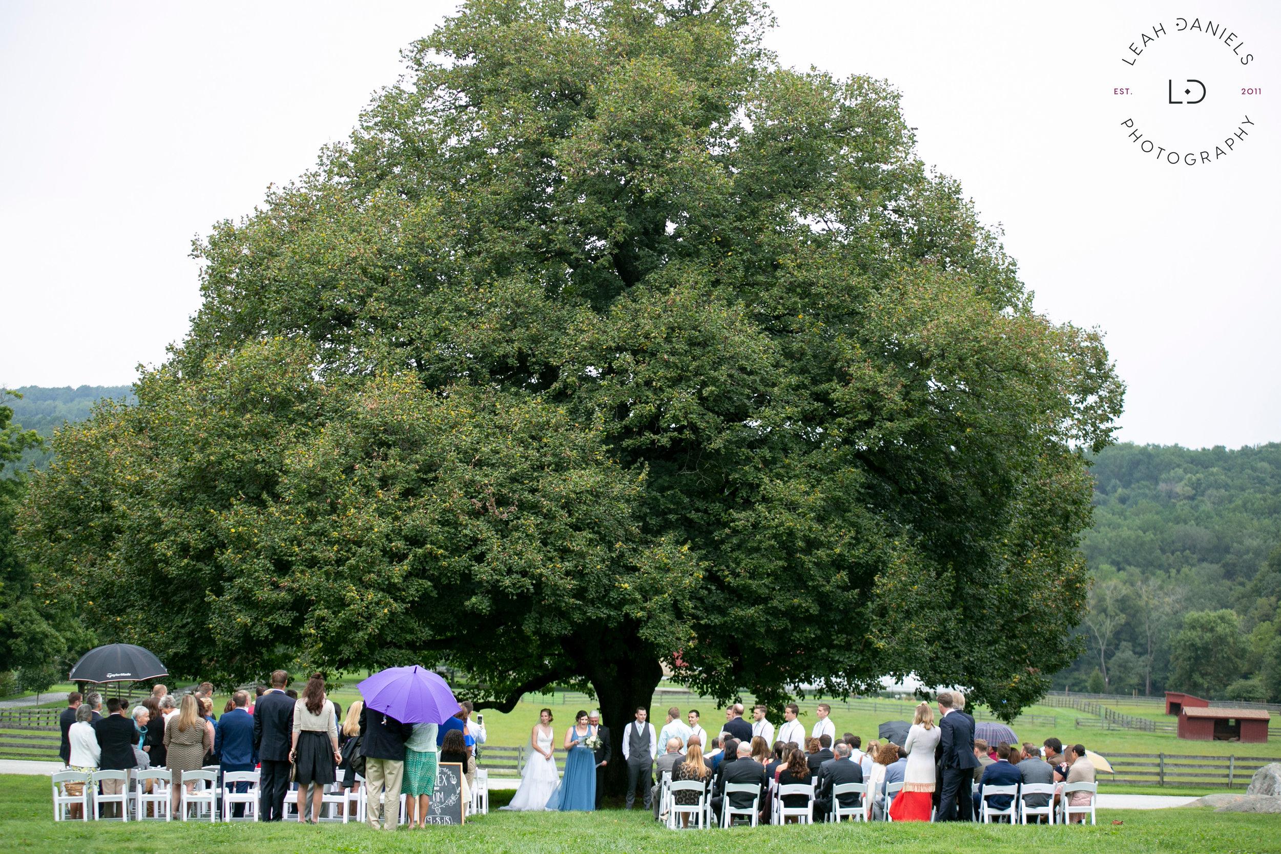 Springton Manor Farm Wedding