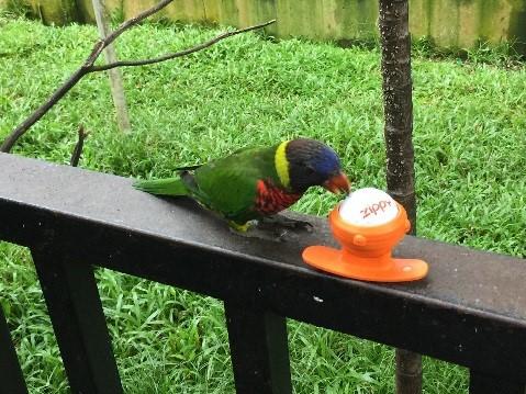 Zippy_KL_park_parrot_03.jpg