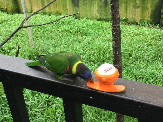 Zippy_KL_park_parrot_04.jpg