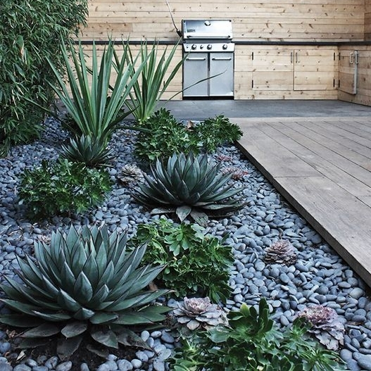 Succulents add an edgy sophistication to any backyard. Image via Pinterest.
