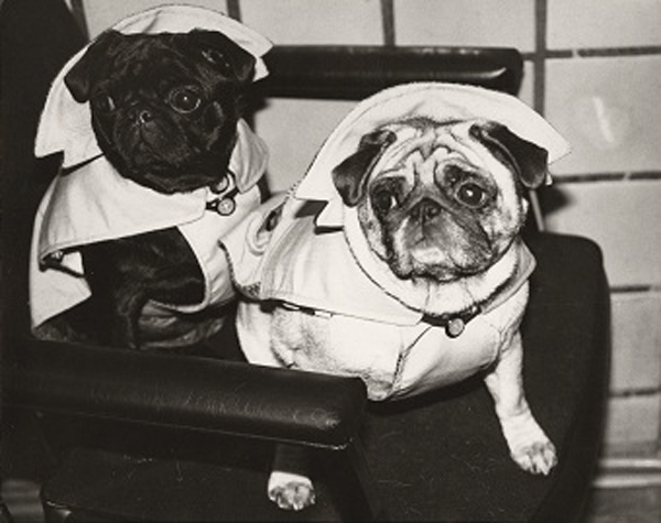 Andy Warhol ,  Dogs In Raincoats , courtesy of Christie's and Andy Warhol Foundation for the Arts