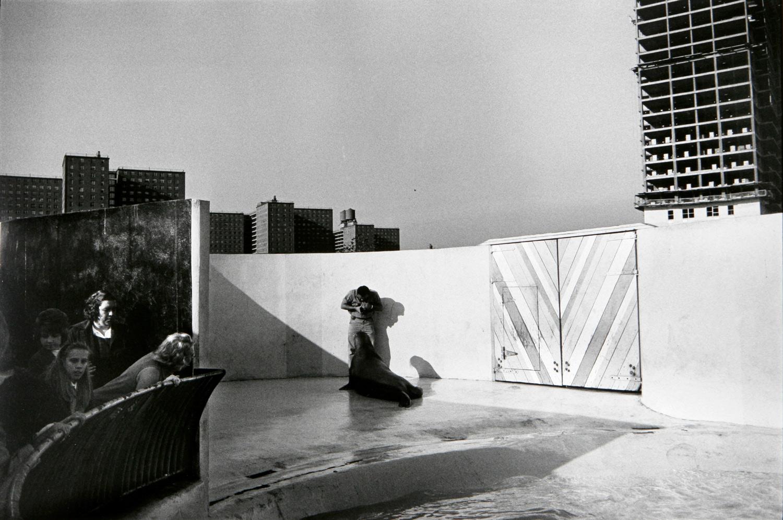Garry Winogrand   New York Aquarium, Coney Island , 1964