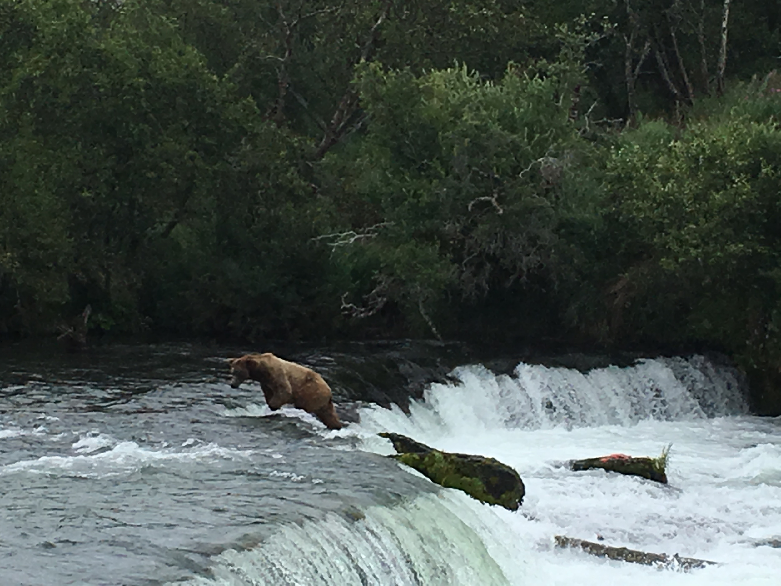 All grizzly bears are brown bears, but not vice versa