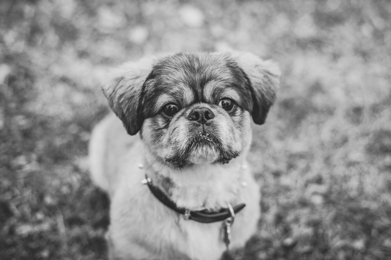 pat-robinson-photography-dog-1.jpg