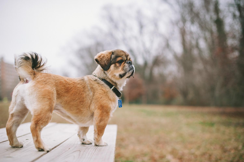 pat-robinson-photography-dog-2.jpg