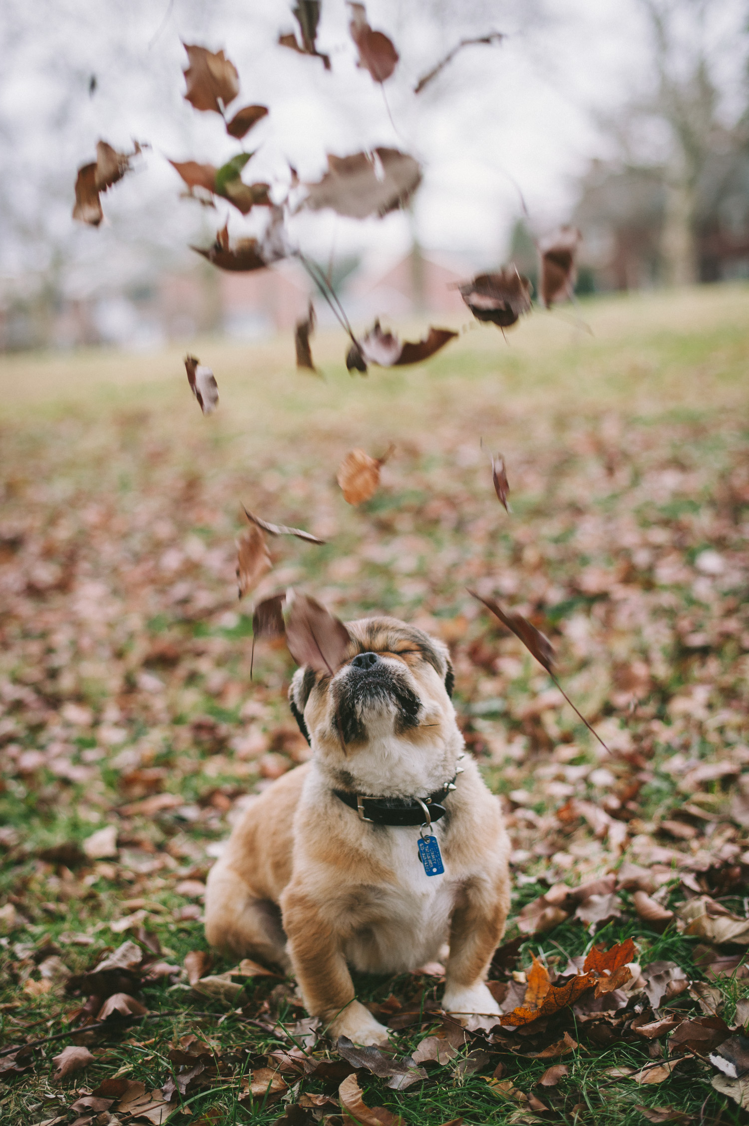 pat-robinson-photography-dog-5.jpg