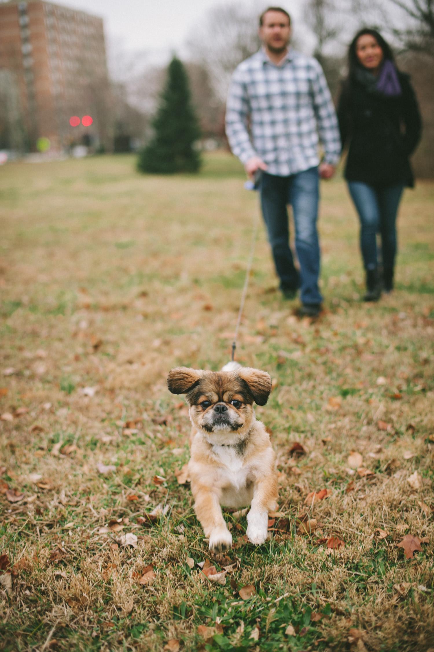 pat-robinson-photography-dog-7.jpg