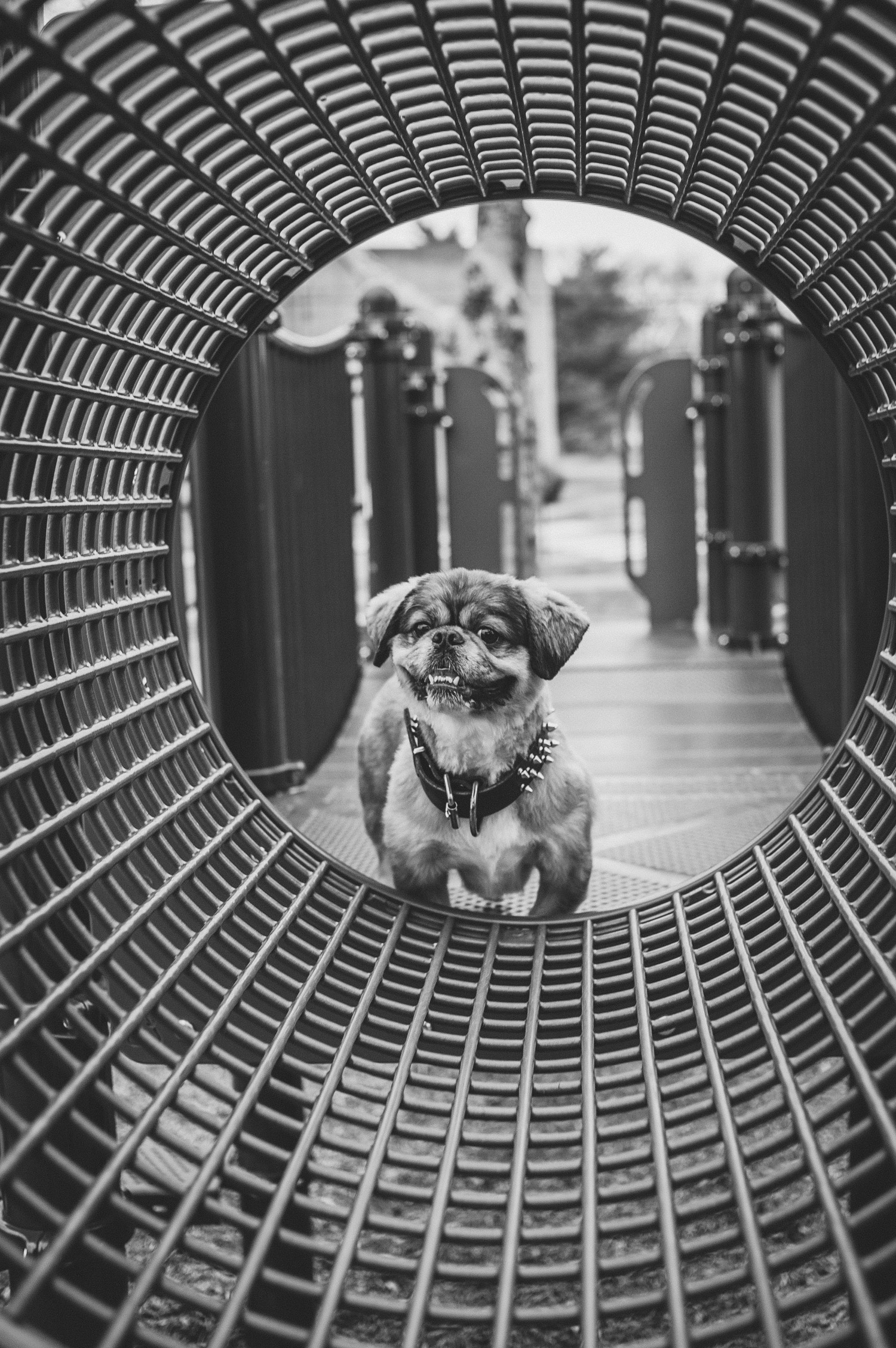 pat-robinson-photography-dog-10.jpg