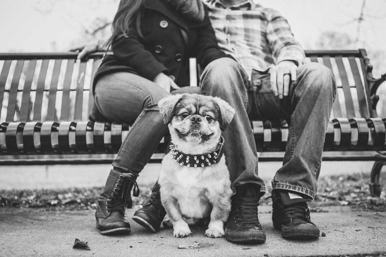pat-robinson-photography-dog-8.jpg