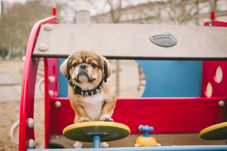 pat-robinson-photography-dog-9.jpg