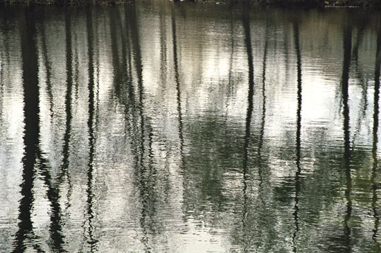 Black & Silver Tree Reflections