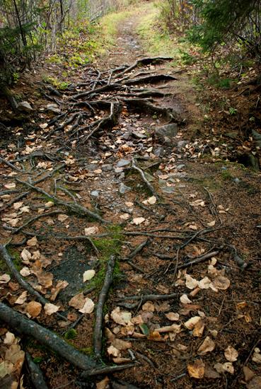 Porcupine Path