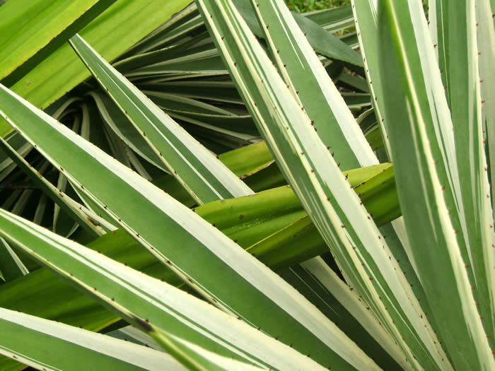 Sword Plant I