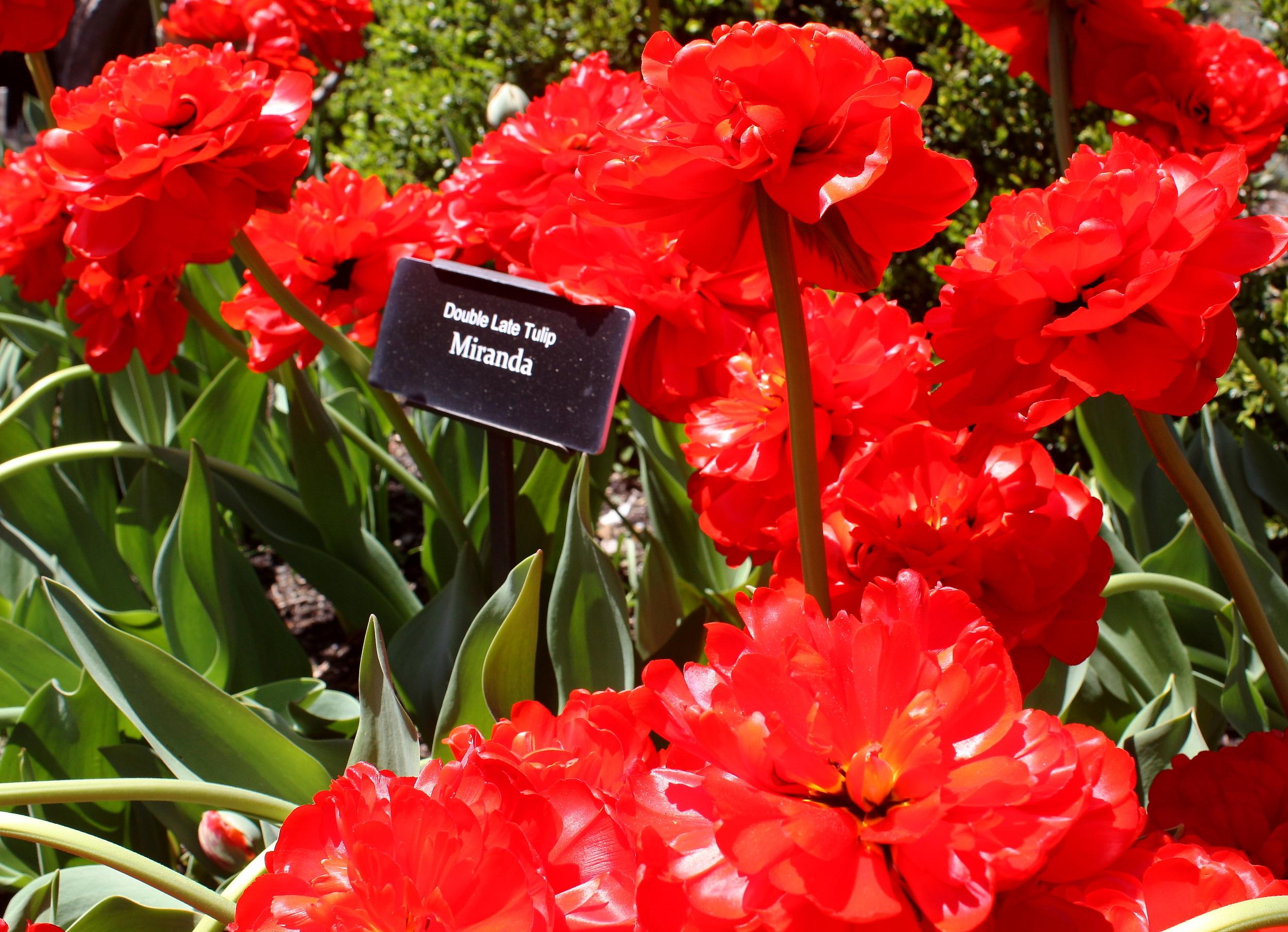 Brooklyn Botanic Gardens, Spring 2014