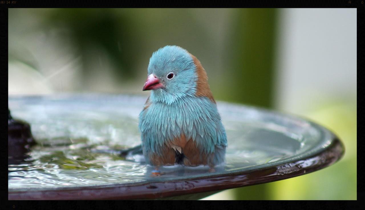 free-blue-bird-bath-wallpaper.jpg