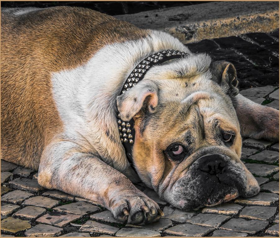 Watch Dog, Bob Green, Oklahoma CC, 2nd HM