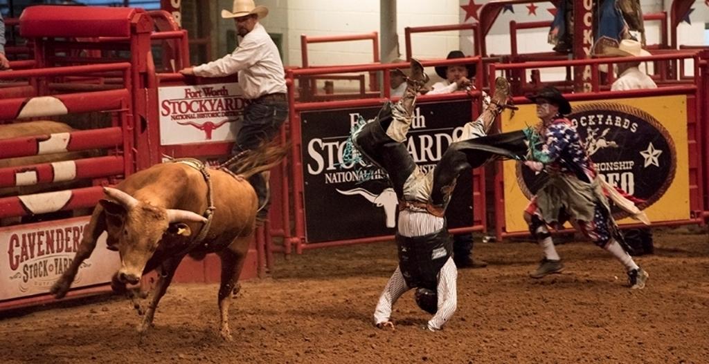 Ride'em Cowboy, Tom Bush, Louisiana PS, 1st Place
