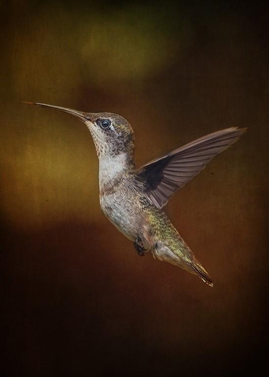 Hummingbird Profile, Pat Leger, Lafayette PS, 3rd Place