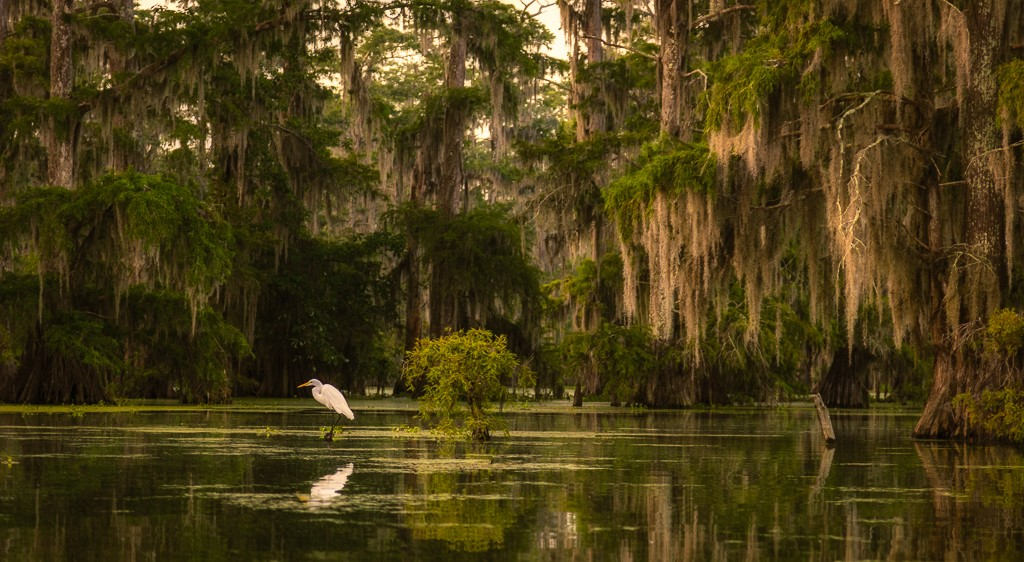 Lone Egret in the Moss,Gregory Daley, Lafayette PS, 1st HM