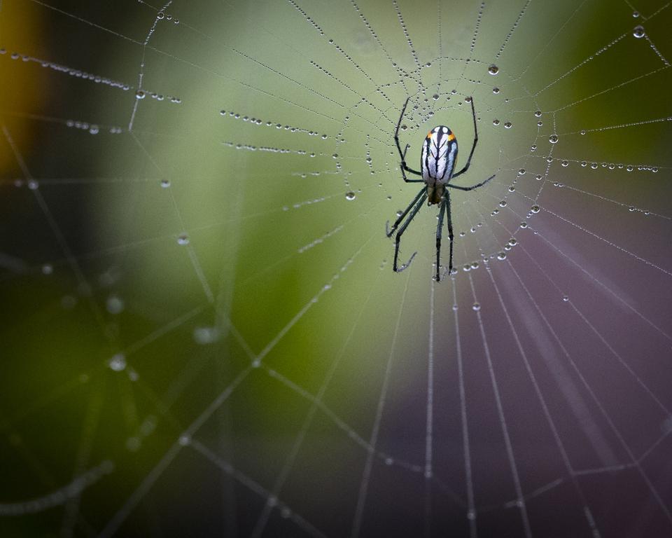 SpiderGreen Backyard, Cynthia Parrish, Beaumont CC, 2nd Place