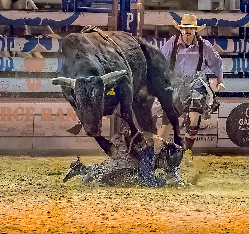 Getting Stepped On,Tom Savage,Cowtown Camera Club,2nd Place,PJ Projected