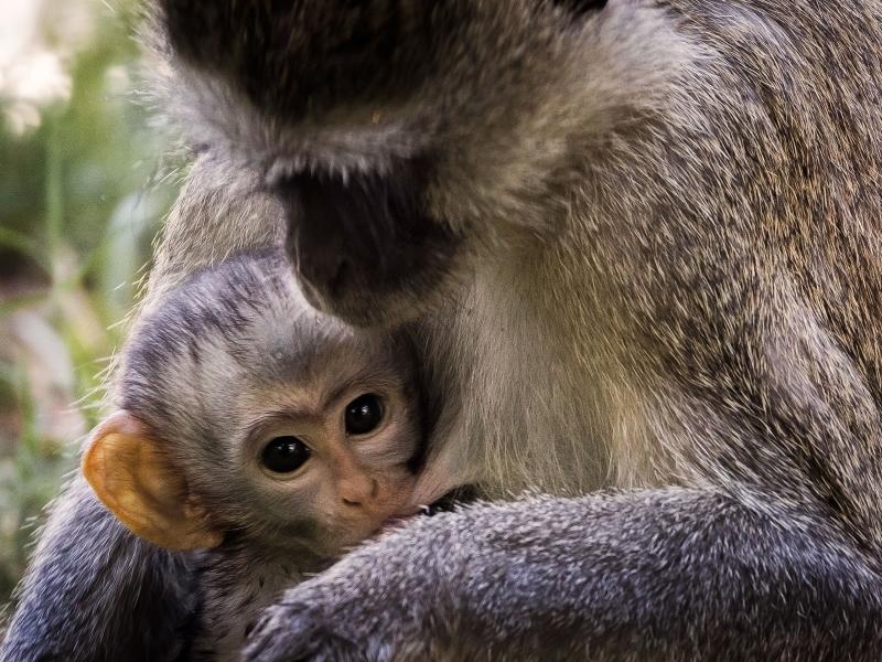 Nursing Monkey, Cathy Smart, Louisiana PS, 3rd