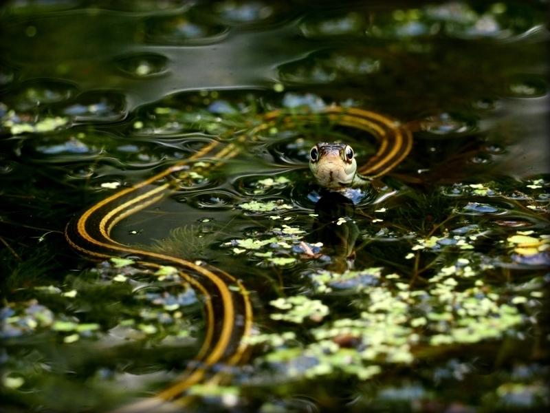Floating Friend, Jane Patterson, Louisiana PS, 2nd HM