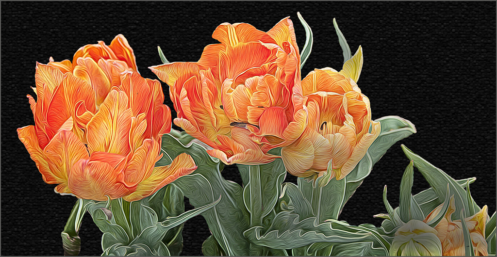 Tulips After the Dutch Masters,Carmen Sewell, Houston PC, 2nd HM