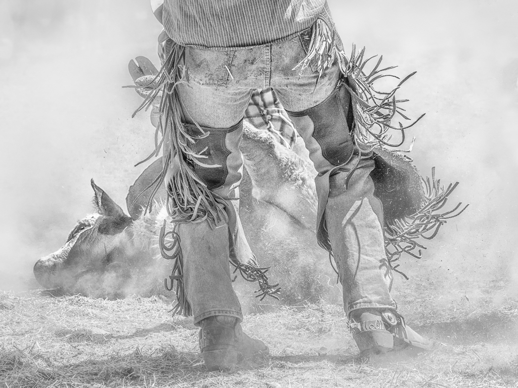 Kickin Up Dust,Alan Whiteside,Dallas CC, 1st Place