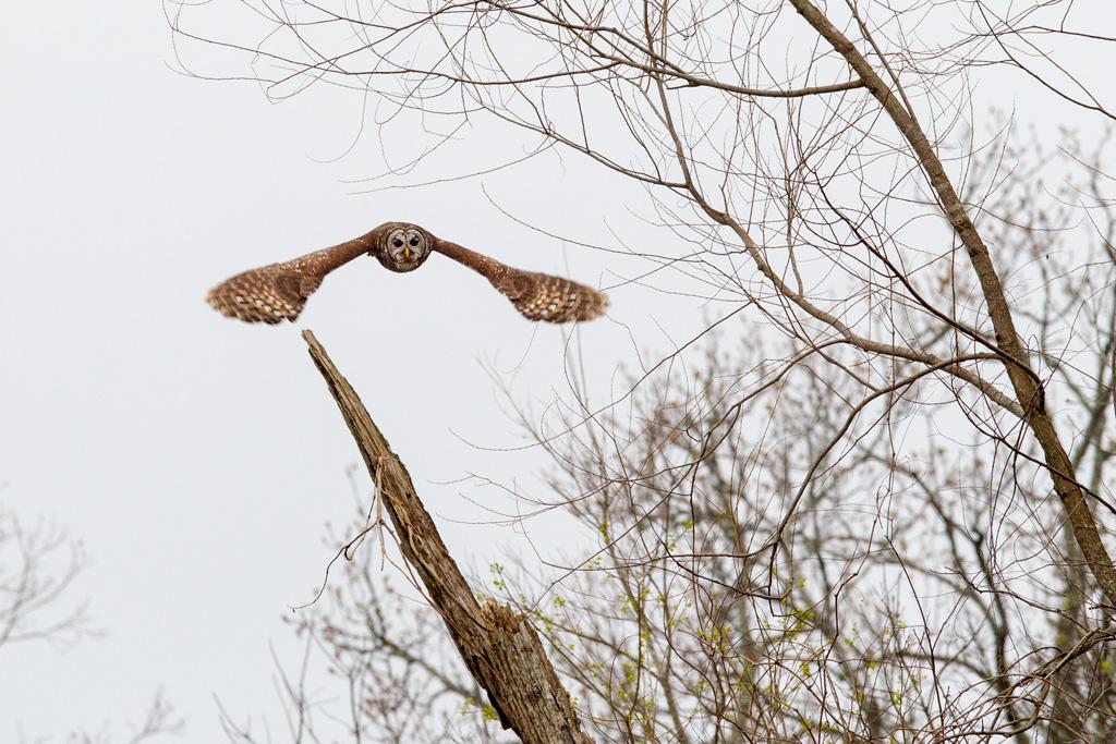 Flying Owl Atchafalaya, Mark Lagrange, GNOCC, 2nd HM