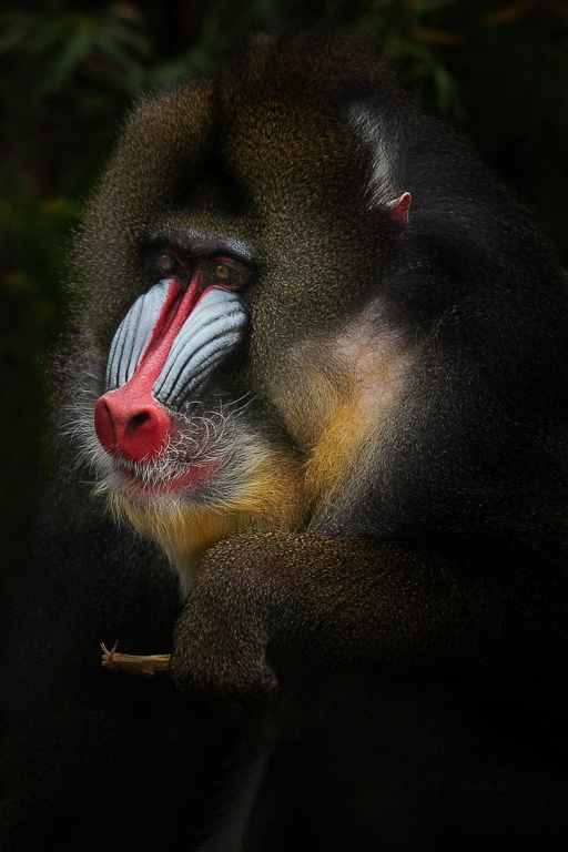 Mandrill with Giant ToothPick, Ed Broussard, Lafayette PS, 3rd Place