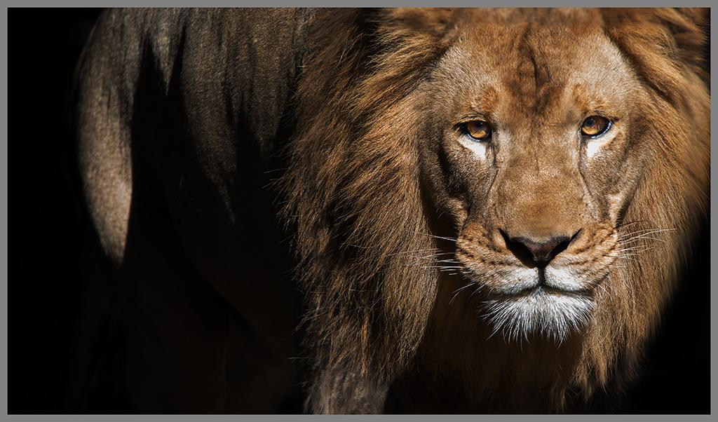 45 - Stalking King  .jpg