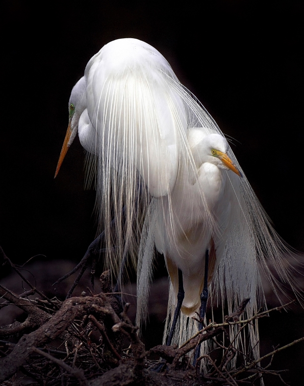 The Shy Bride, Earl Arboneaux Jr, Louisiana Photographic Society, 2nd HM