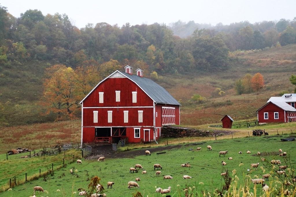 Shepherd's Farm, Verna Pratt, Slidell Photography Club, 1st HM