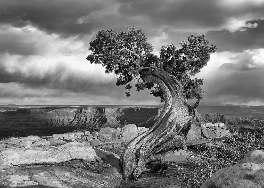 Twisted Tree, Lyuda Cameron, Oklahoma Camera Club, Third Place