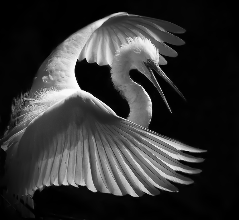 In the Light, Linda Medine, Louisiana Photographic Society, 2nd HM