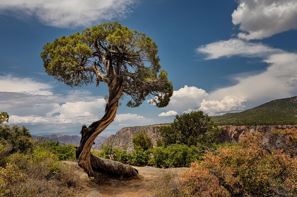 Crooked Tree, Cathy Smart, Louisiana PS, 2nd HM
