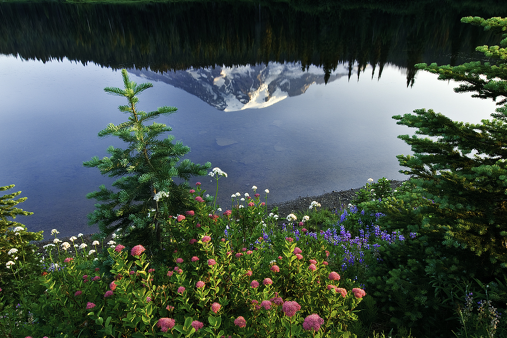 Rainier Wildflowers, Jack Harrison, Heard Nature PC, 3rd Place