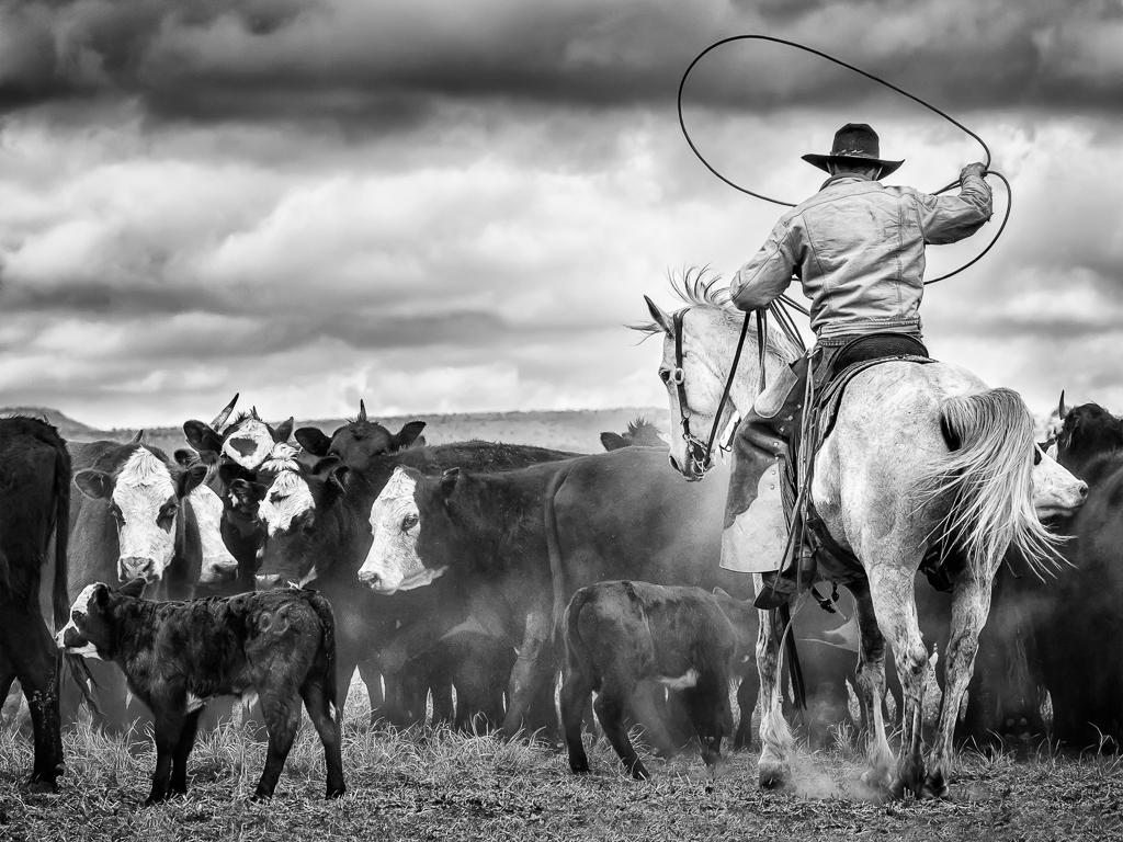 The Roper, Alan Whiteside, Dallas CC, 1st HM