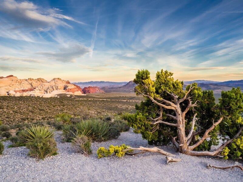 Red Rock Canyon, Gene Bachman, Louisiana PS, 3rd