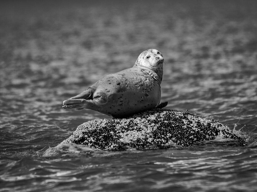 Seal, Larry Petterborg, Dallas CC, 2nd HM