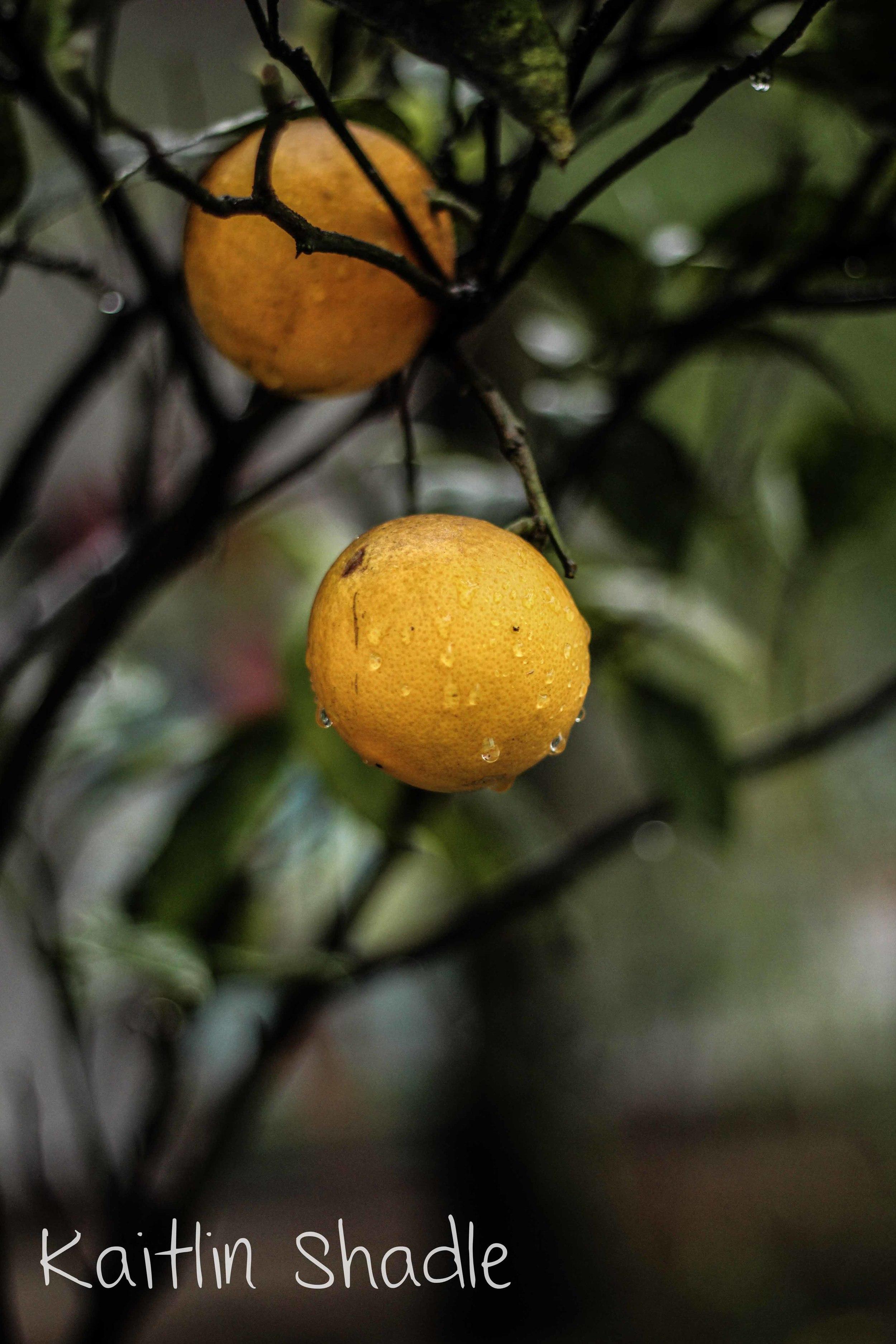 Little Oranges
