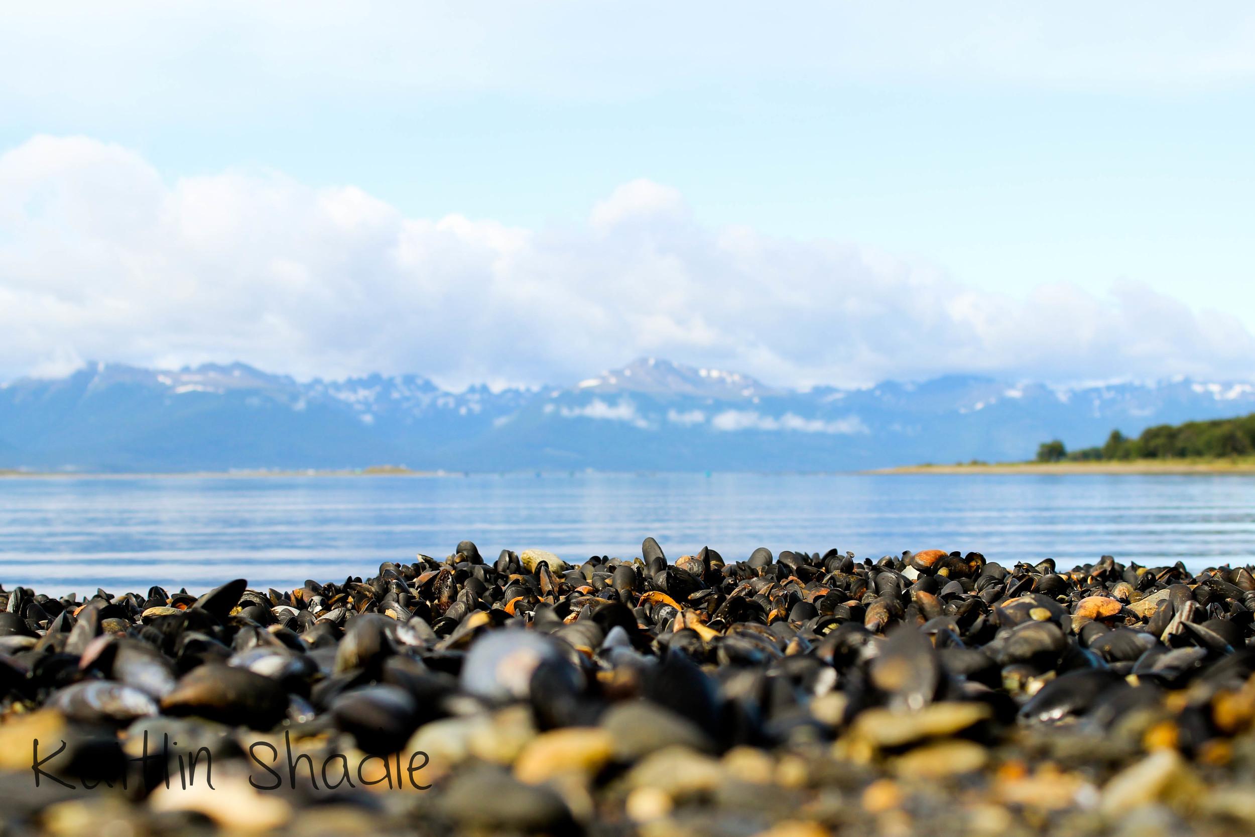 Mussel Littered Beach