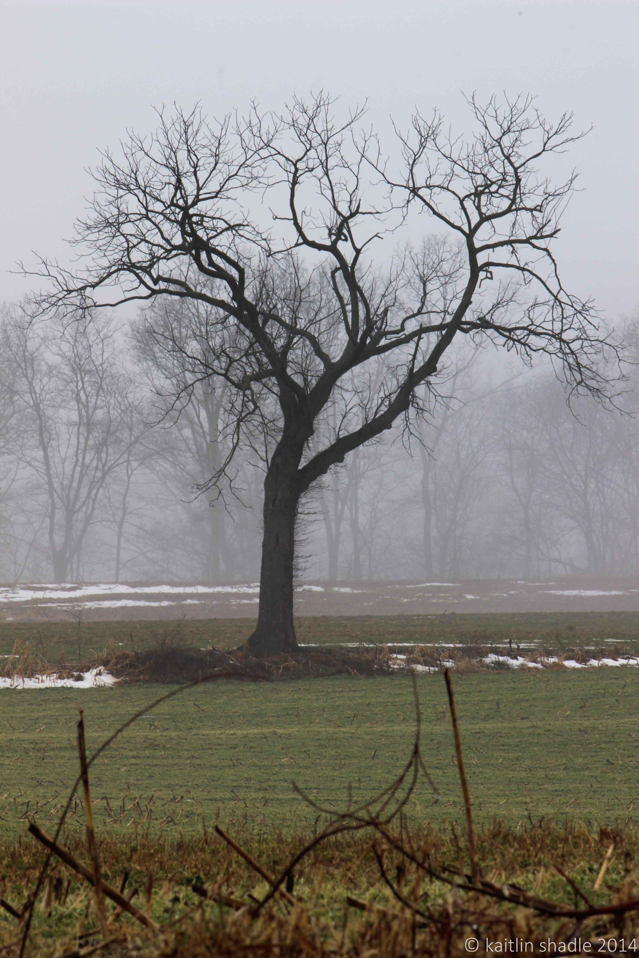 Danielle's Tree