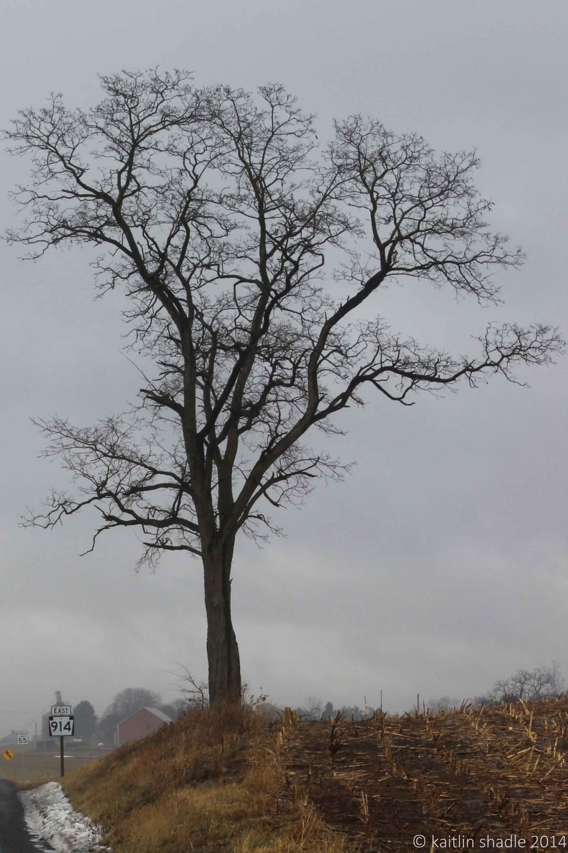 Roadside Tree Fog