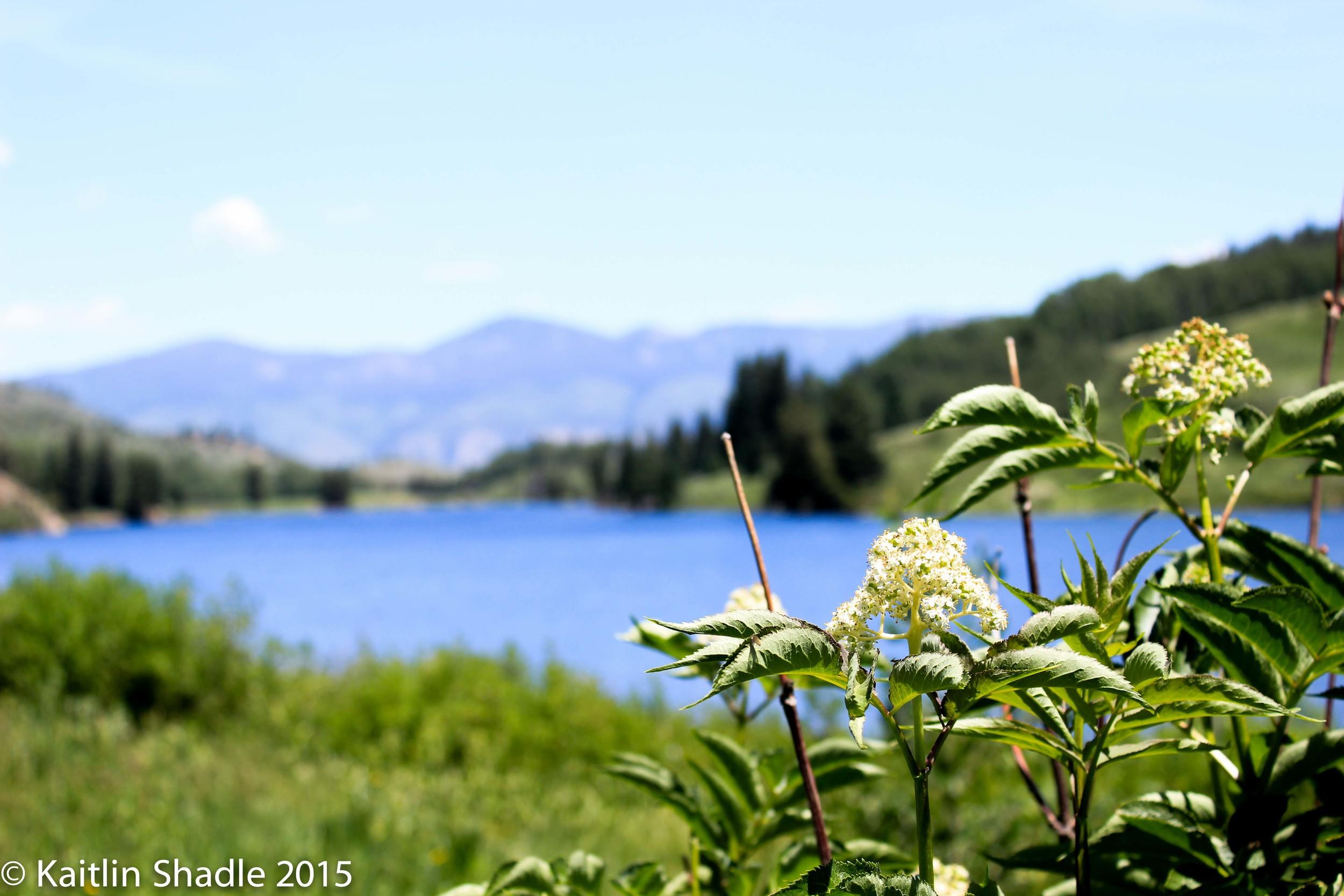 White Flowers at Cataract Lake